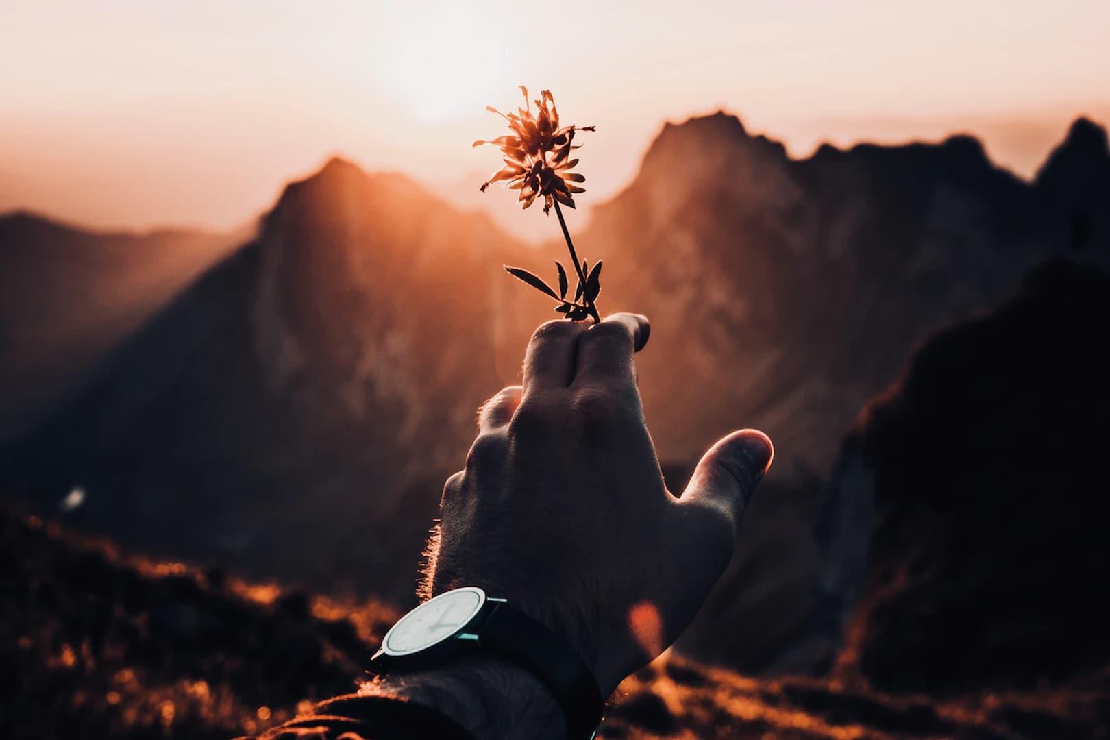 L'énergie des fleurs rares