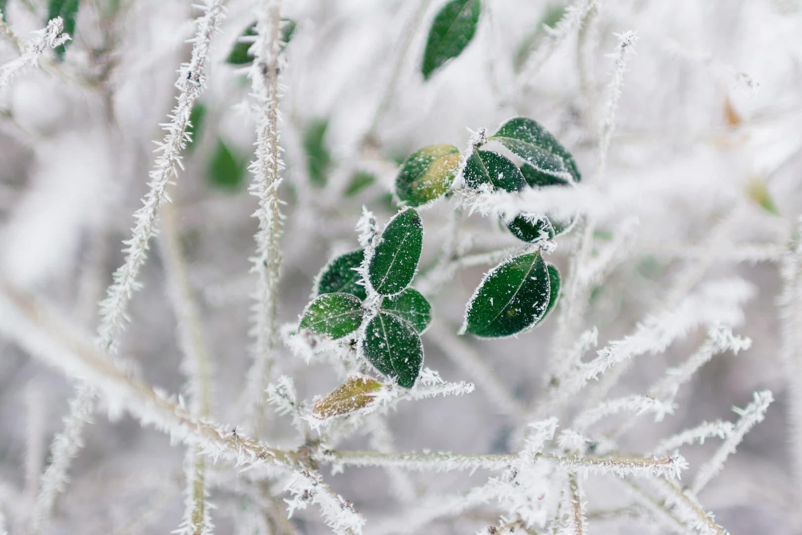 Naturopathie et défenses immunitaires